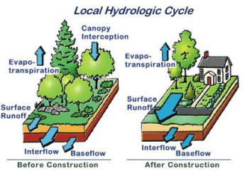 Lawn Vs Natural Vegetation